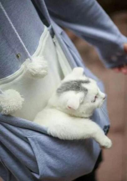 Grau Kangaroo Katzenohren Hoodie Kapuzenpullover Sweatshirt Katzentasche Damen Mode